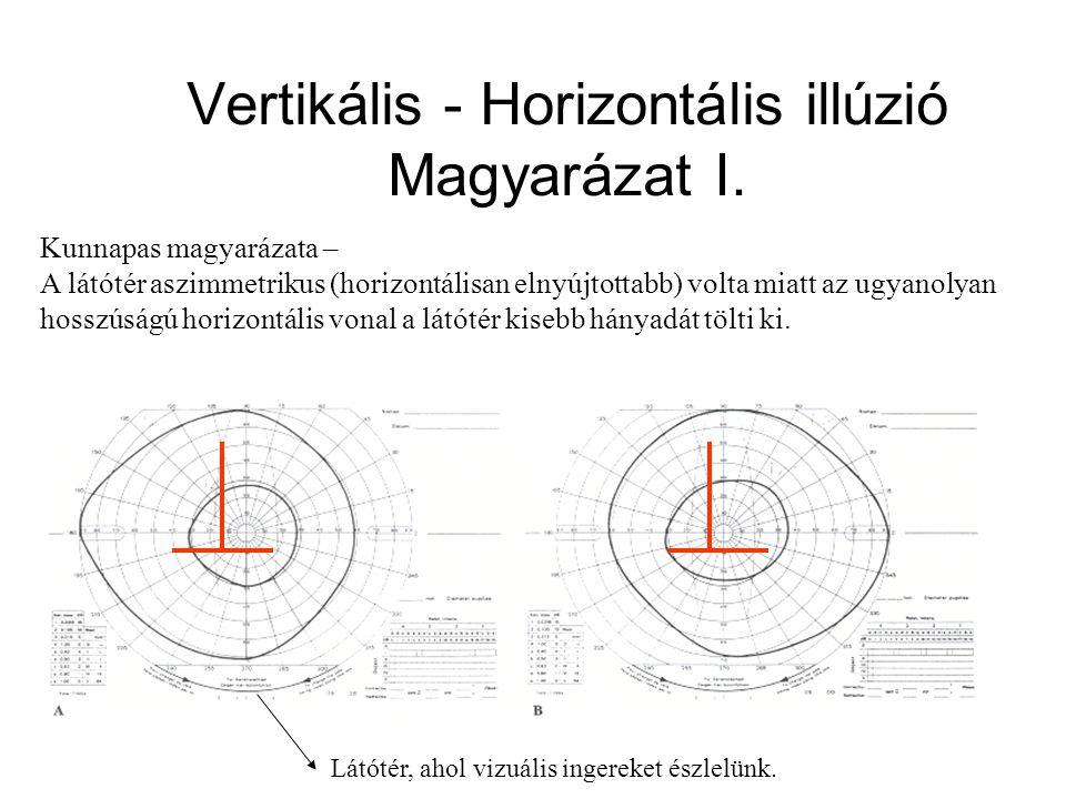 Vertikális - Horizontális illúzió Magyarázat I.
