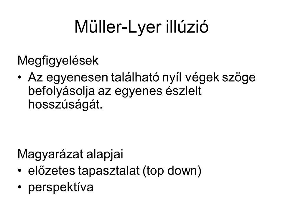 Müller-Lyer illúzió Megfigyelések