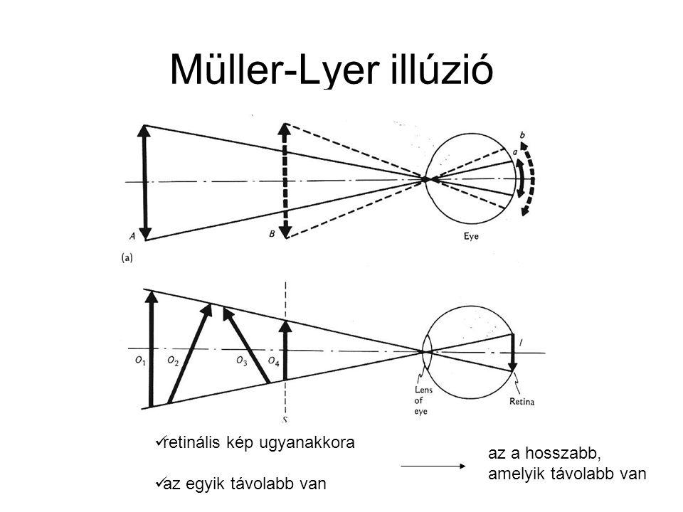 Müller-Lyer illúzió retinális kép ugyanakkora az a hosszabb,