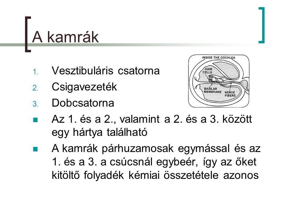 A kamrák Vesztibuláris csatorna Csigavezeték Dobcsatorna