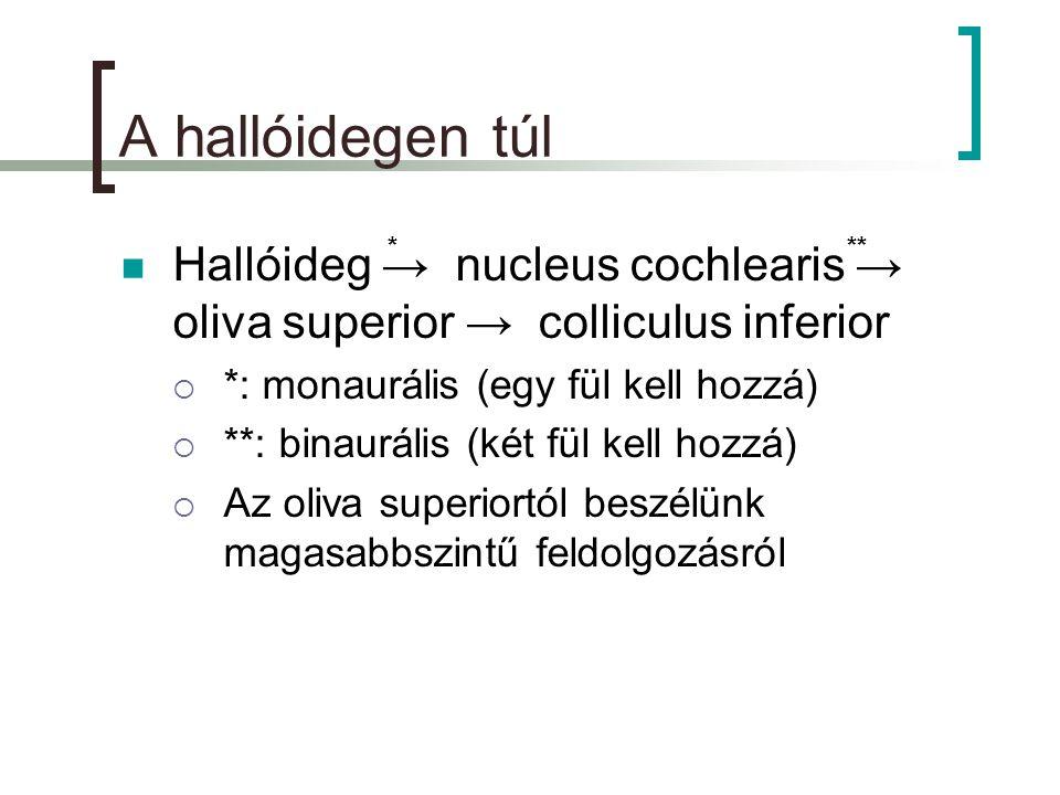 A hallóidegen túl Hallóideg → nucleus cochlearis → oliva superior → colliculus inferior. *: monaurális (egy fül kell hozzá)