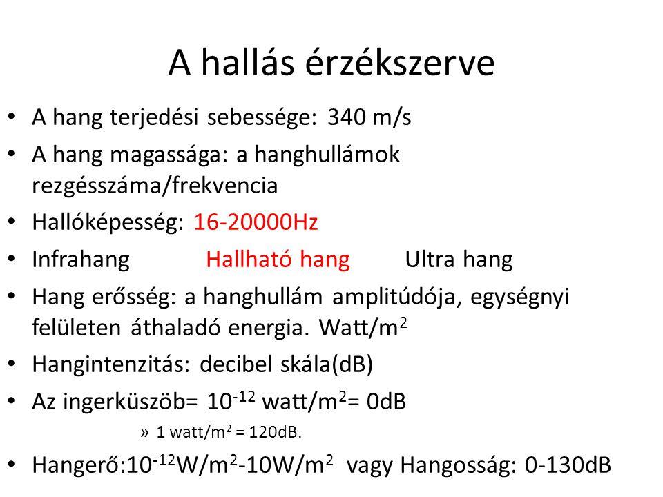 A hallás érzékszerve A hang terjedési sebessége: 340 m/s