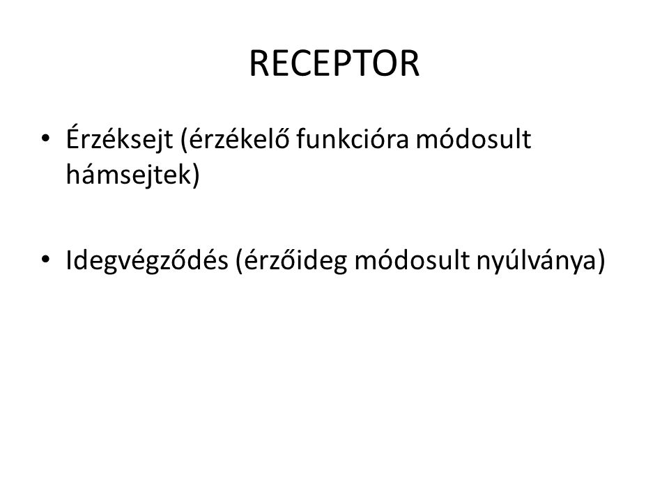 RECEPTOR Érzéksejt (érzékelő funkcióra módosult hámsejtek)