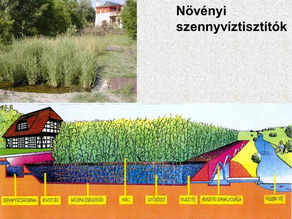 Növényi szennyvíztisztítók
