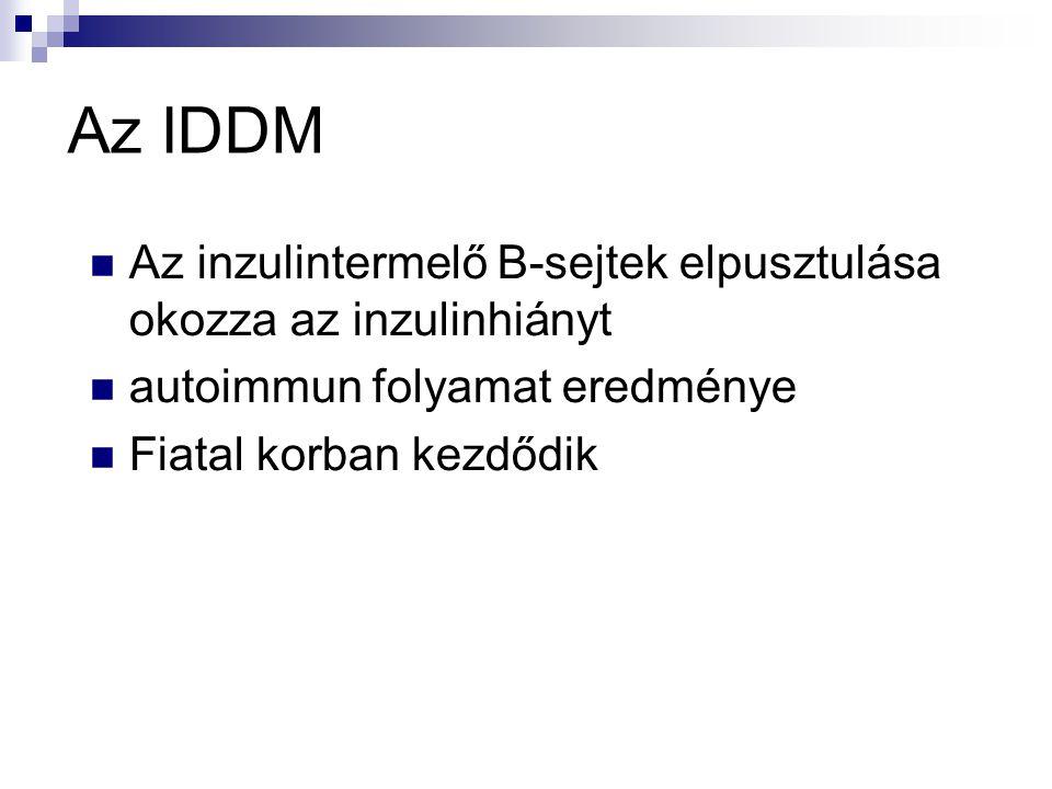 Az IDDM Az inzulintermelő B-sejtek elpusztulása okozza az inzulinhiányt. autoimmun folyamat eredménye.