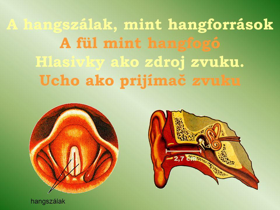A hangszálak, mint hangforrások A fül mint hangfogó Hlasivky ako zdroj zvuku. Ucho ako prijímač zvuku
