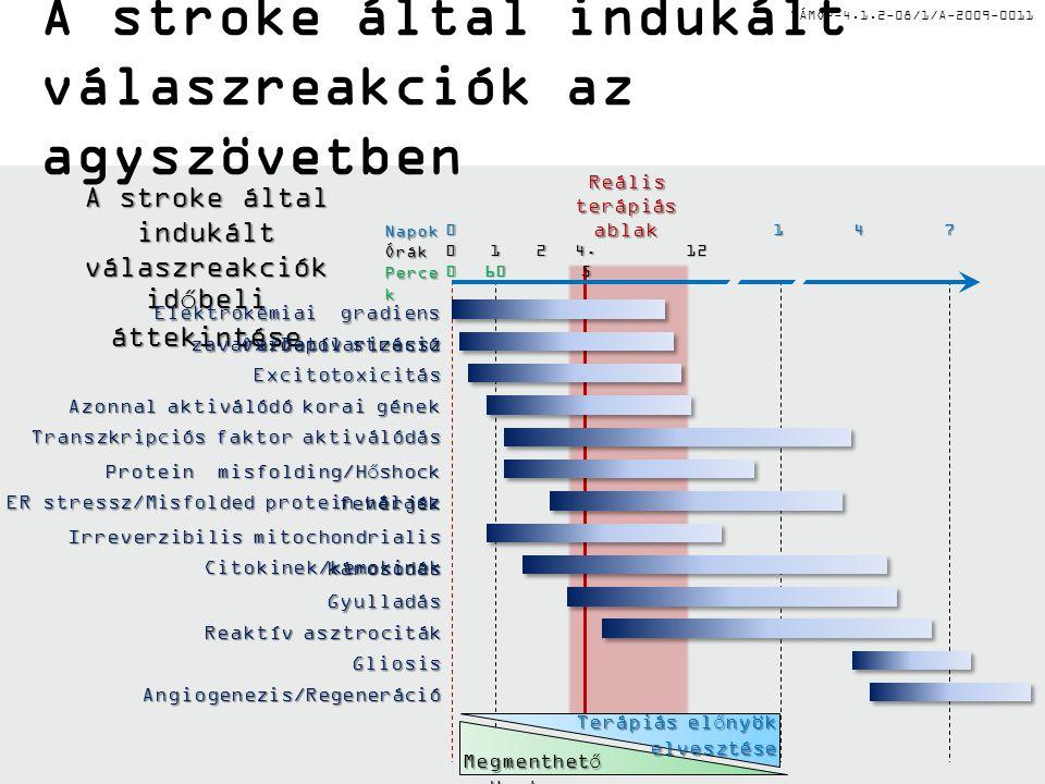 A stroke által indukált válaszreakciók időbeli áttekintése
