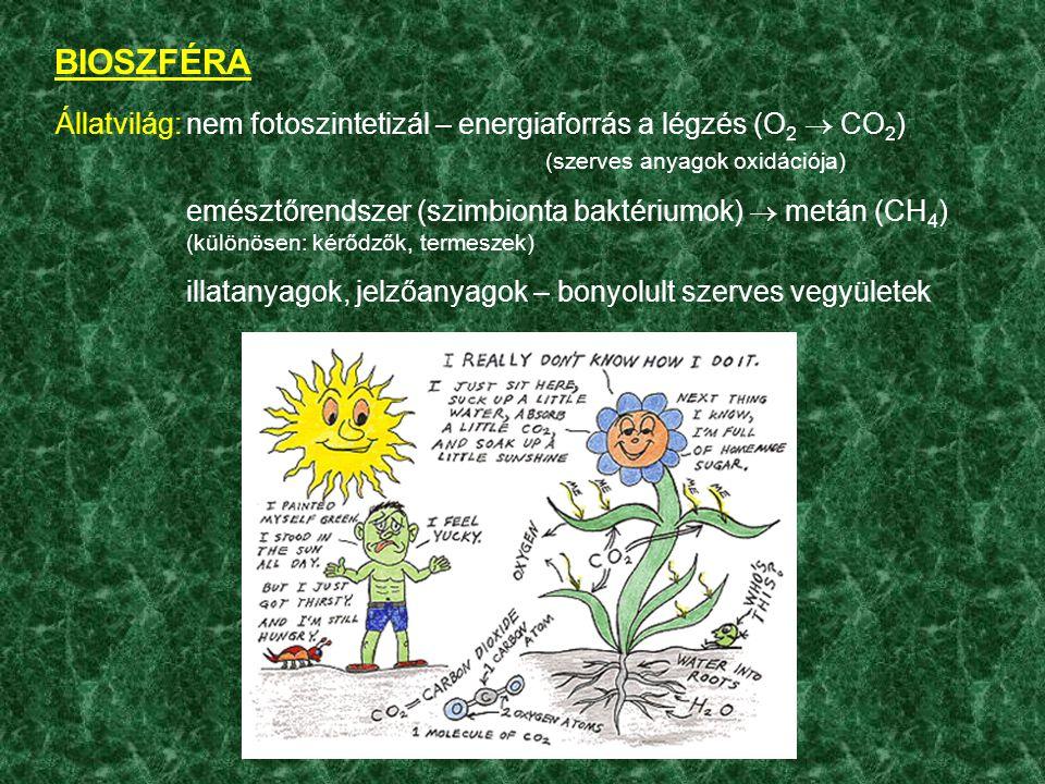 BIOSZFÉRA Állatvilág: nem fotoszintetizál – energiaforrás a légzés (O2  CO2) (szerves anyagok oxidációja)
