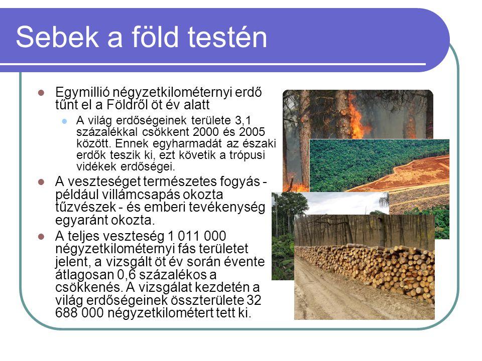 Sebek a föld testén Egymillió négyzetkilométernyi erdő tűnt el a Földről öt év alatt.