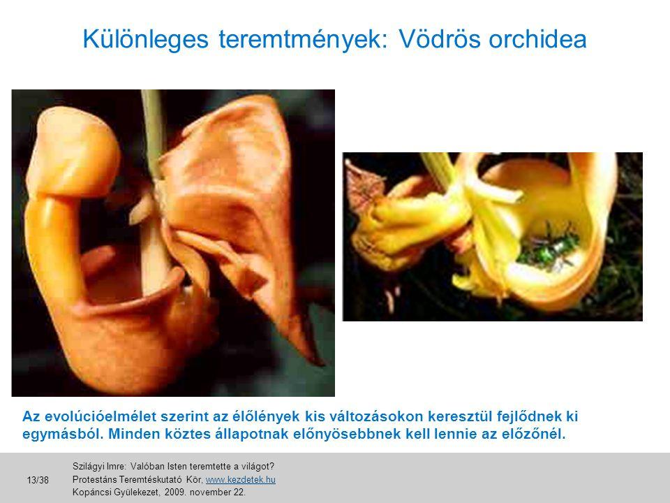 Különleges teremtmények: Vödrös orchidea