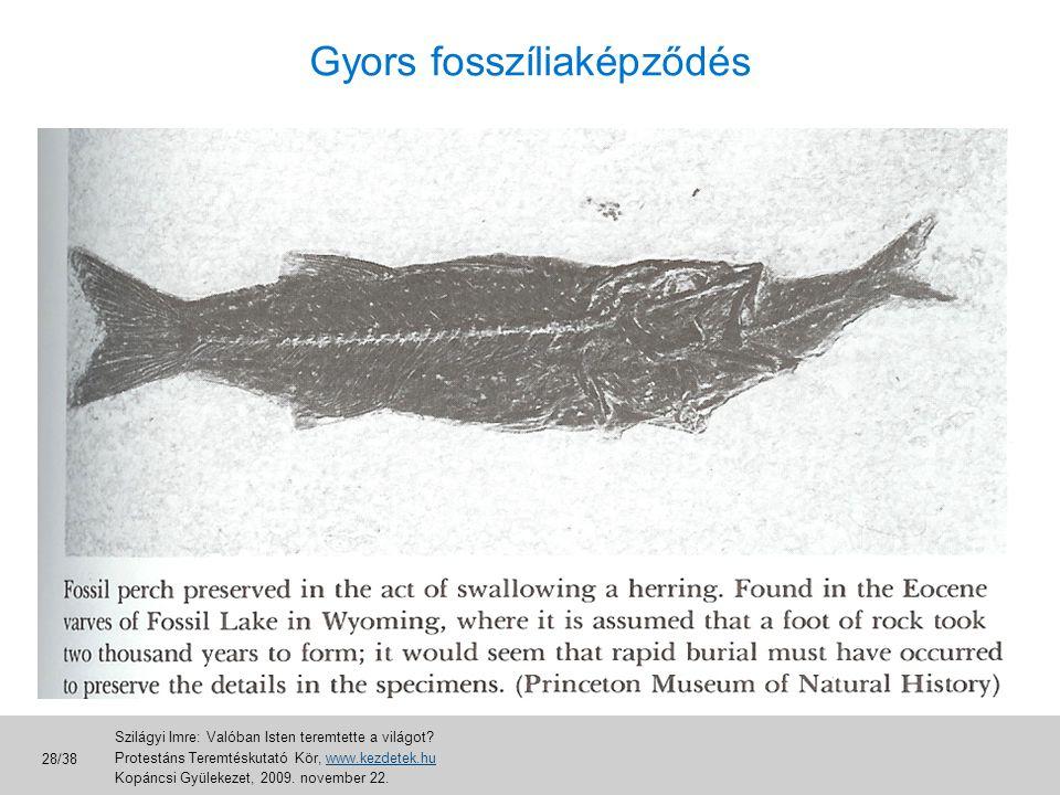 Gyors fosszíliaképződés
