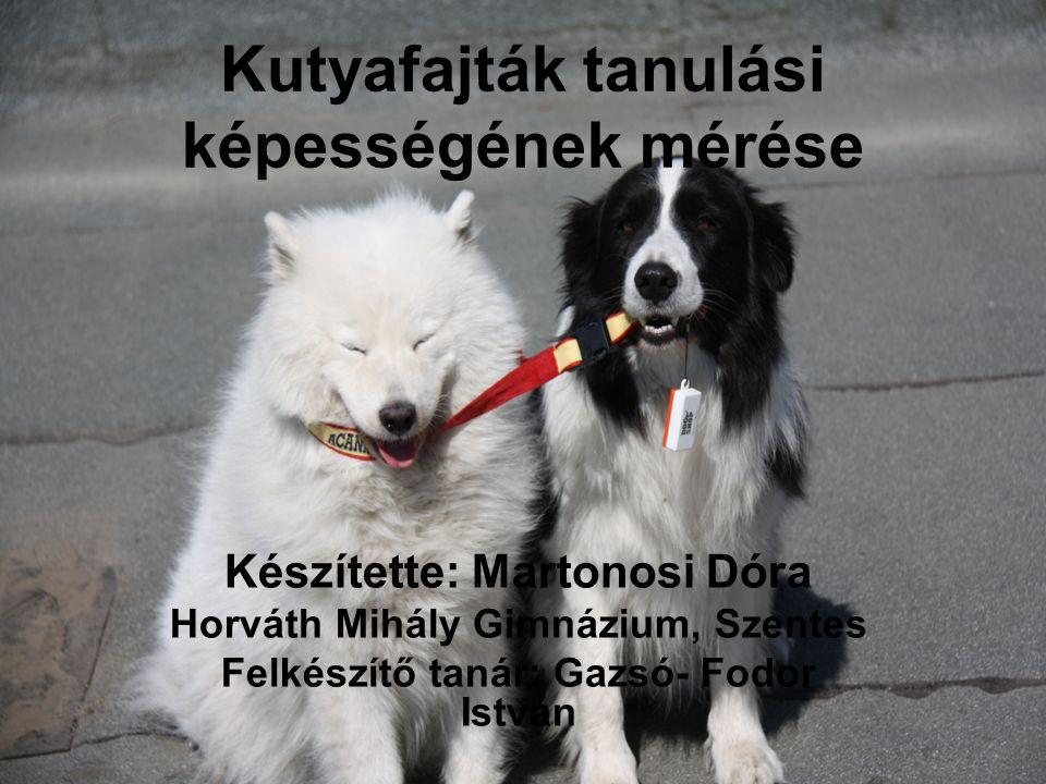 Kutyafajták tanulási képességének mérése