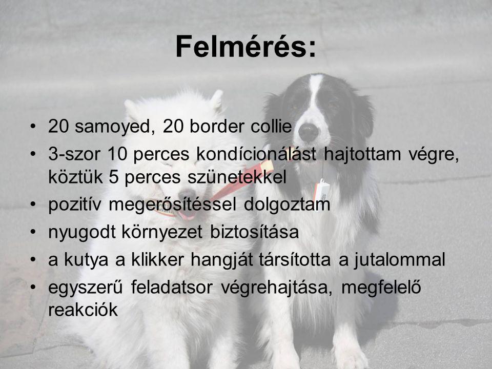 Felmérés: 20 samoyed, 20 border collie