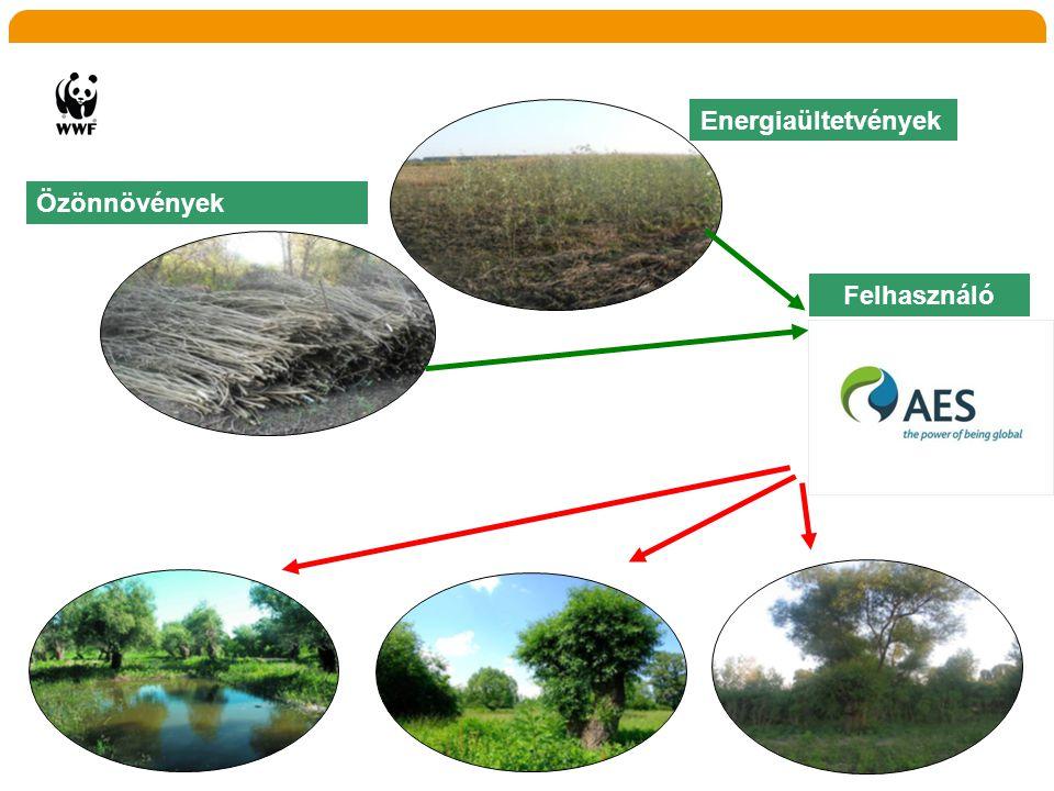 Energiaültetvények Özönnövények Felhasználó