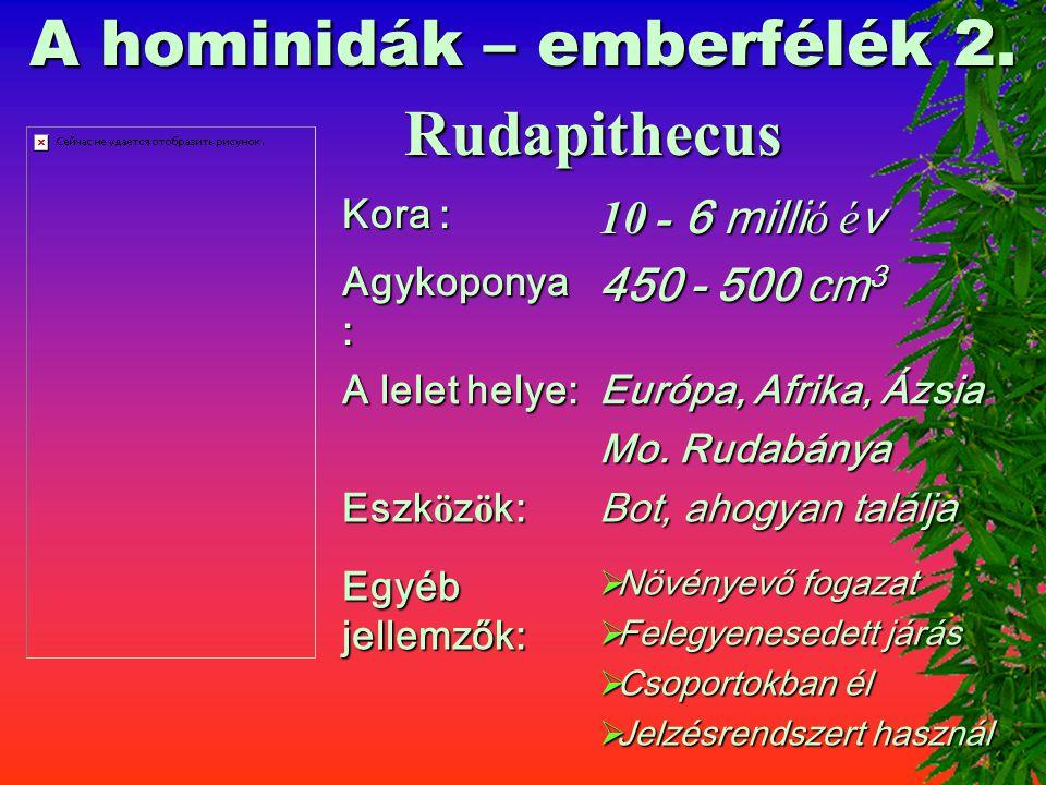 A hominidák – emberfélék 2.