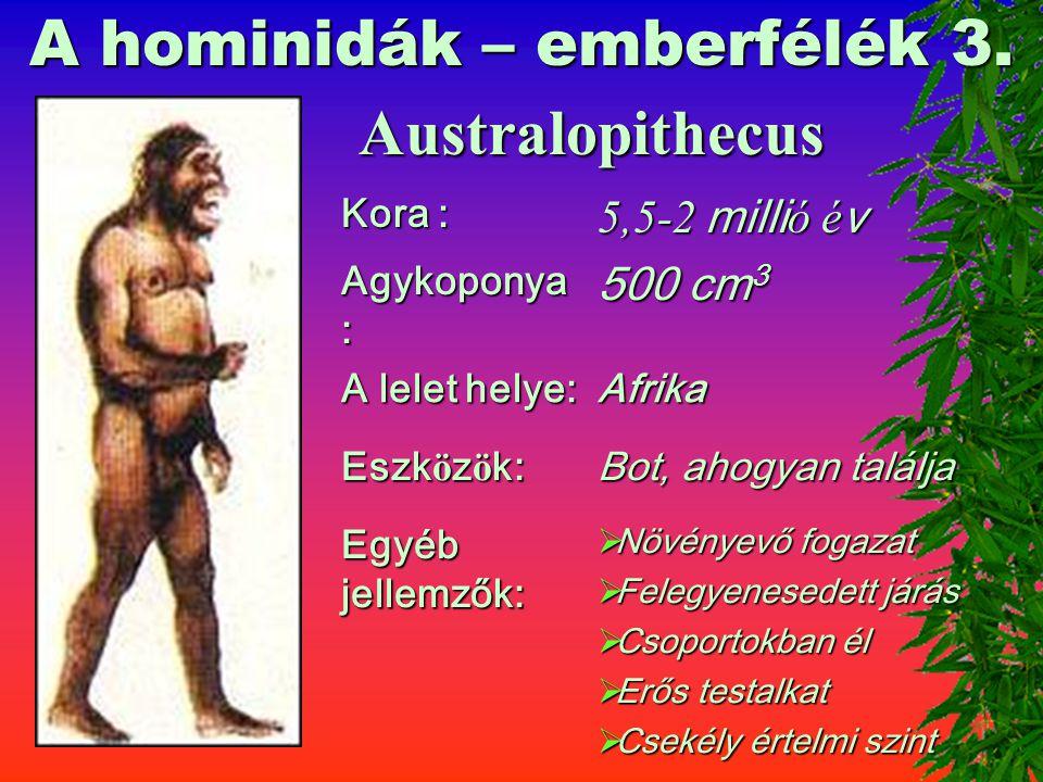 A hominidák – emberfélék 3.