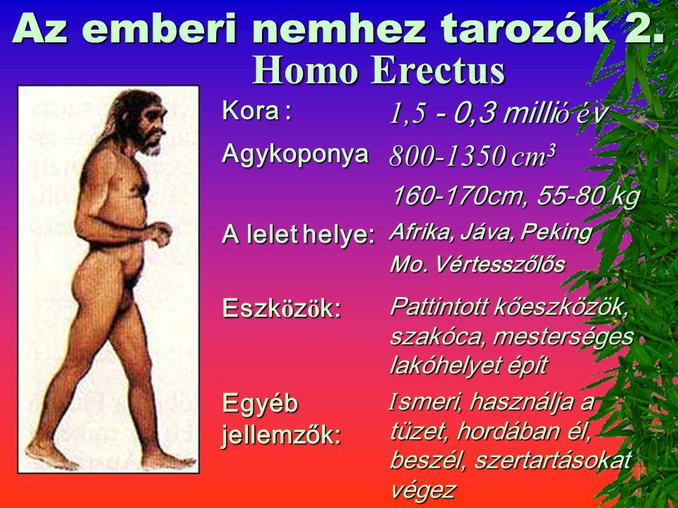 Az emberi nemhez tarozók 2.