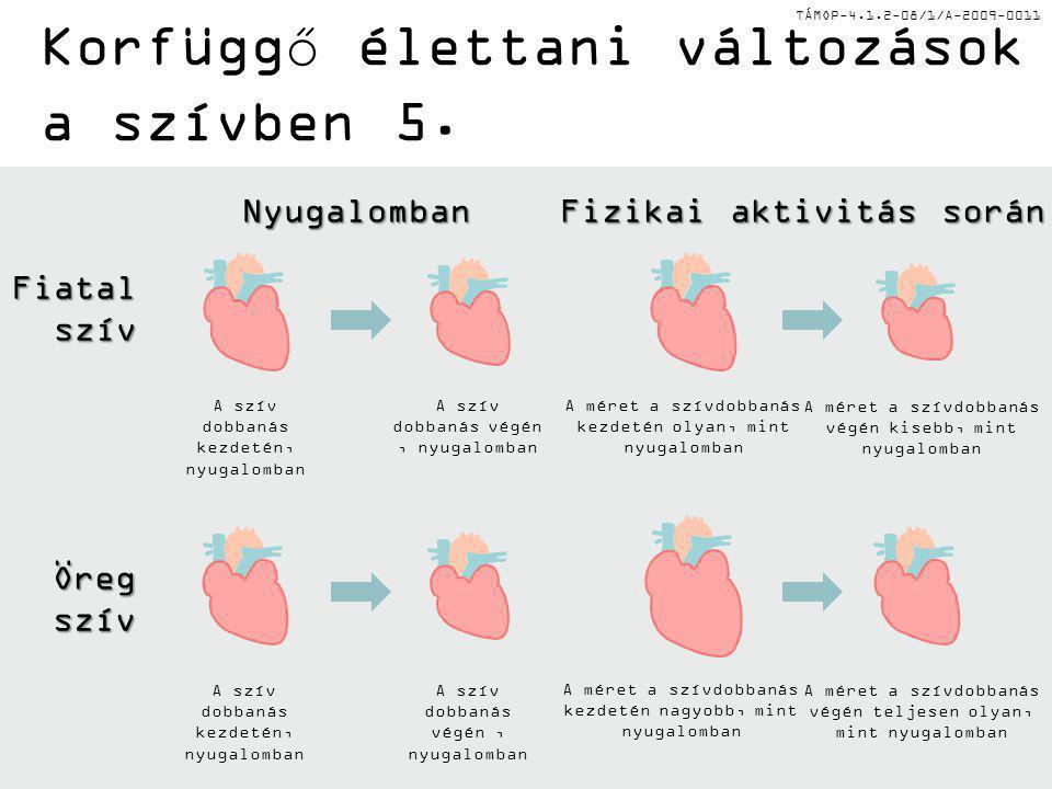 Korfüggő élettani változások a szívben 5.