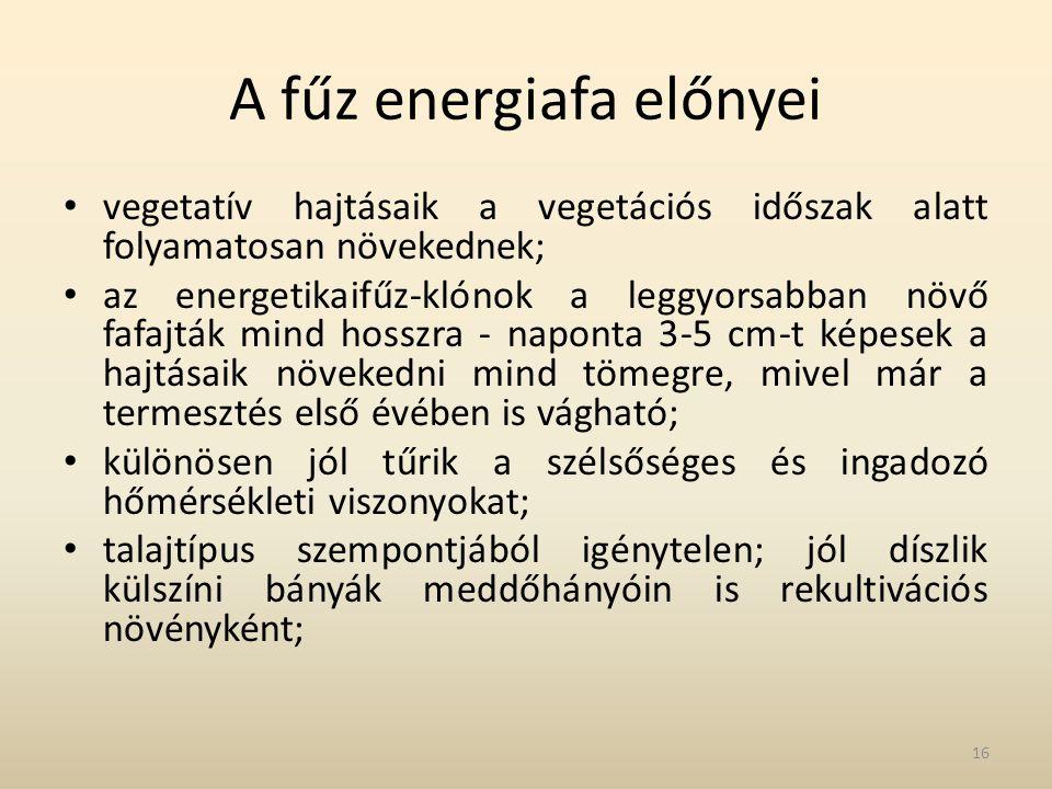 A fűz energiafa előnyei