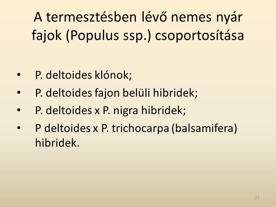 A termesztésben lévő nemes nyár fajok (Populus ssp.) csoportosítása