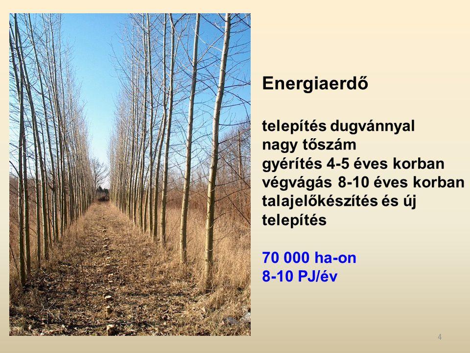 Energiaerdő telepítés dugvánnyal nagy tőszám gyérítés 4-5 éves korban végvágás 8-10 éves korban talajelőkészítés és új telepítés 70 000 ha-on 8-10 PJ/év