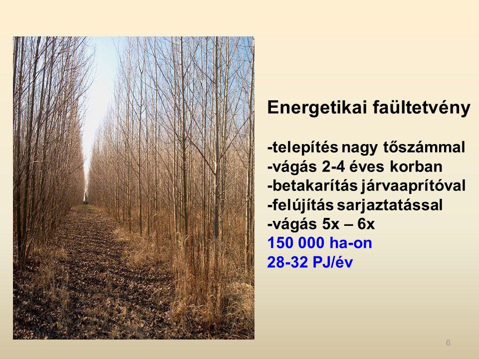 Energetikai faültetvény -telepítés nagy tőszámmal -vágás 2-4 éves korban -betakarítás járvaaprítóval -felújítás sarjaztatással -vágás 5x – 6x 150 000 ha-on 28-32 PJ/év