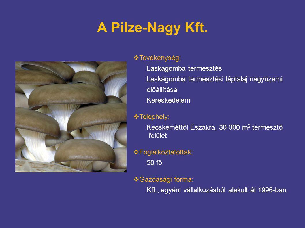 A Pilze-Nagy Kft. Tevékenység: Laskagomba termesztés