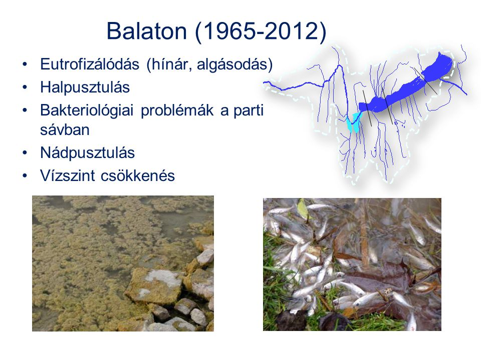Balaton (1965-2012) Eutrofizálódás (hínár, algásodás) Halpusztulás