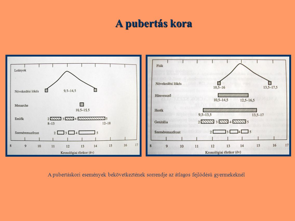A pubertás kora A pubertáskori események bekövetkeztének sorrendje az átlagos fejlődésű gyermekeknél.