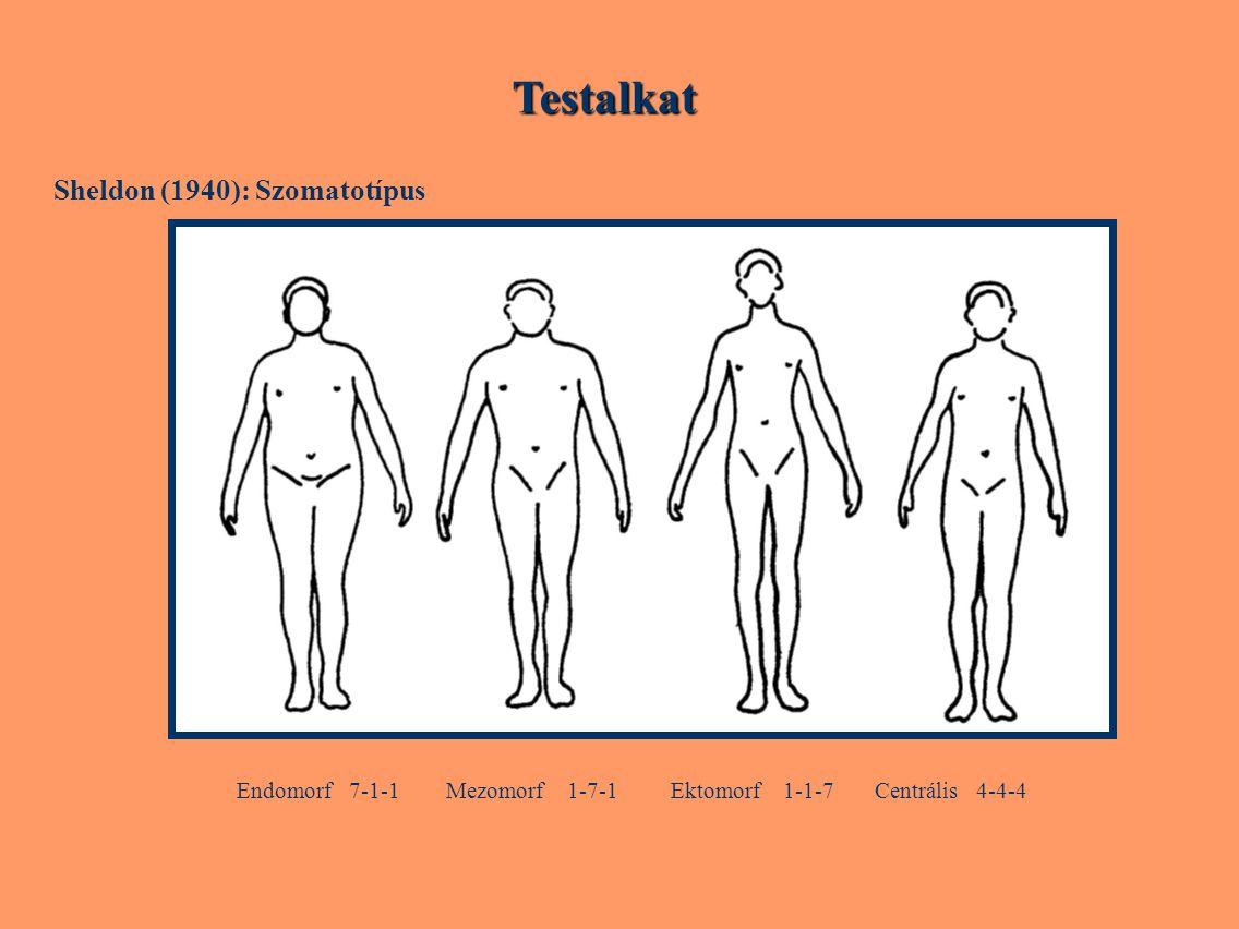 Testalkat Endomorf 7-1-1 Mezomorf 1-7-1 Ektomorf 1-1-7 Centrális 4-4-4
