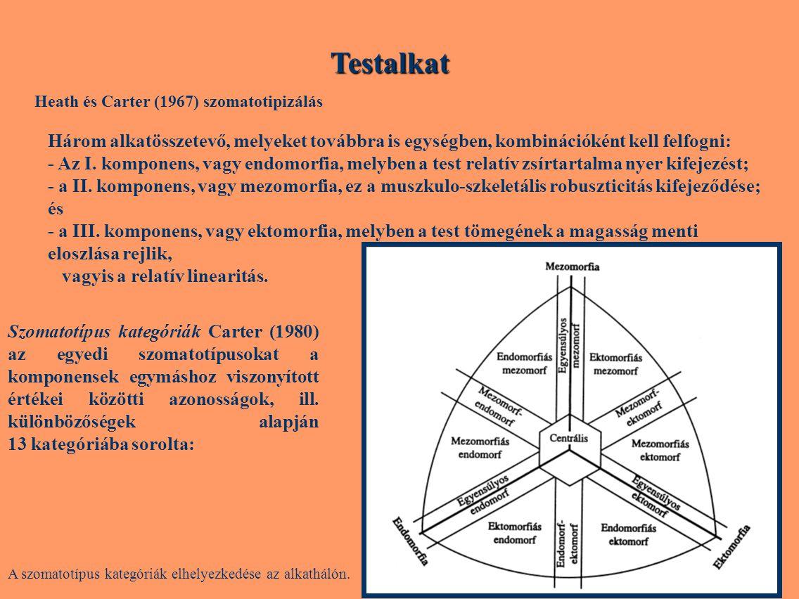 Testalkat Heath és Carter (1967) szomatotipizálás. Három alkatösszetevő, melyeket továbbra is egységben, kombinációként kell felfogni: