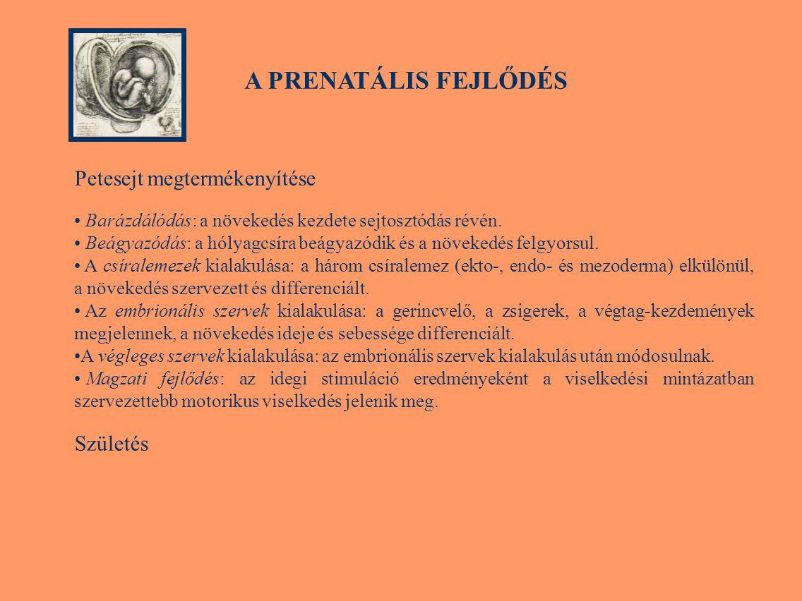 A PRENATÁLIS FEJLŐDÉS Petesejt megtermékenyítése Születés