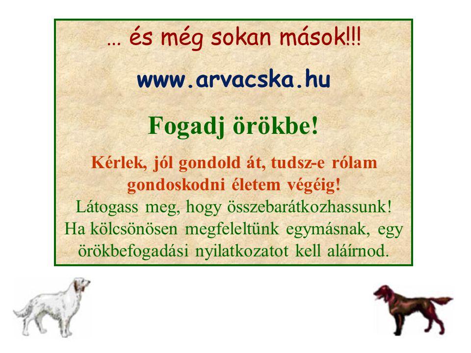 Fogadj örökbe! … és még sokan mások!!! www.arvacska.hu