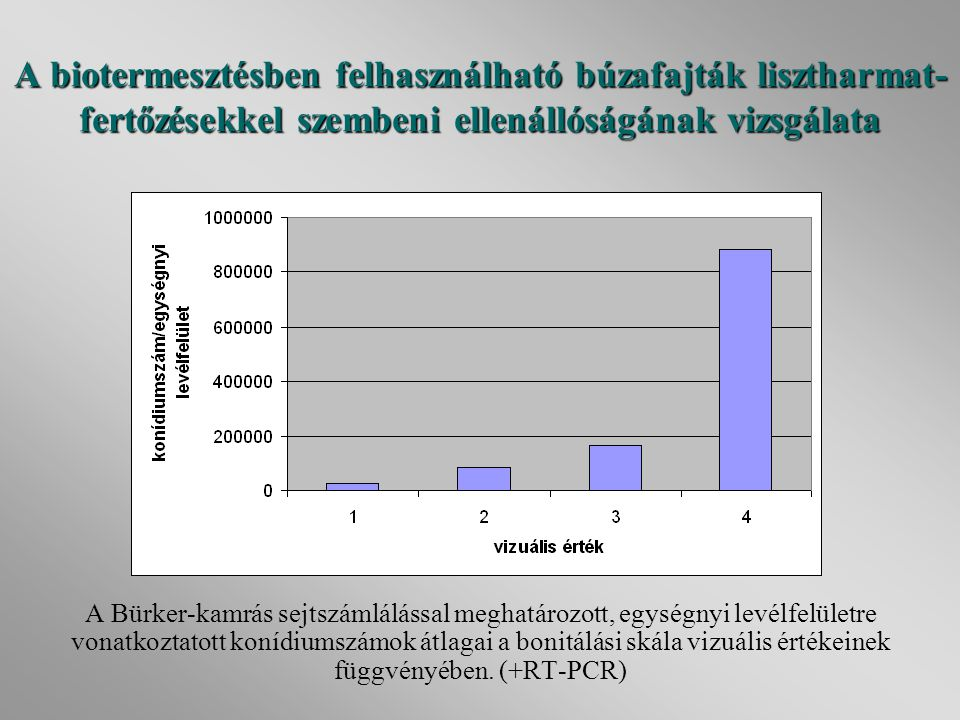 A biotermesztésben felhasználható búzafajták lisztharmat-fertőzésekkel szembeni ellenállóságának vizsgálata