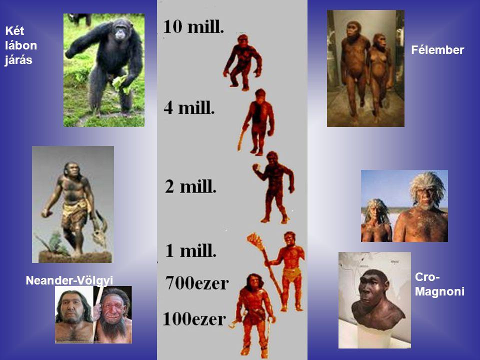 Két lábon járás Félember Cro-Magnoni Neander-Völgyi
