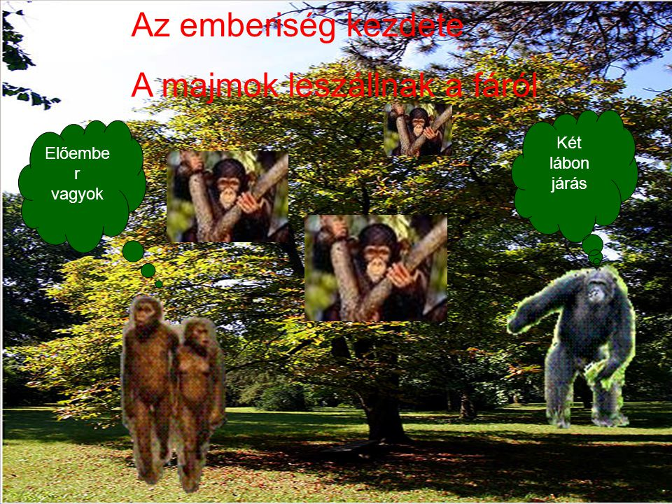 A majmok leszállnak a fáról