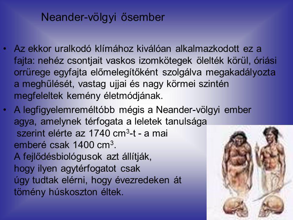 Neander-völgyi ősember