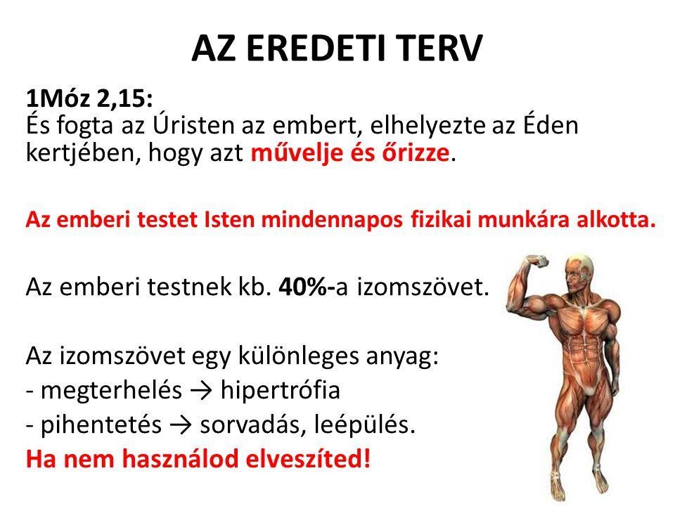 AZ EREDETI TERV 1Móz 2,15: És fogta az Úristen az embert, elhelyezte az Éden kertjében, hogy azt művelje és őrizze.