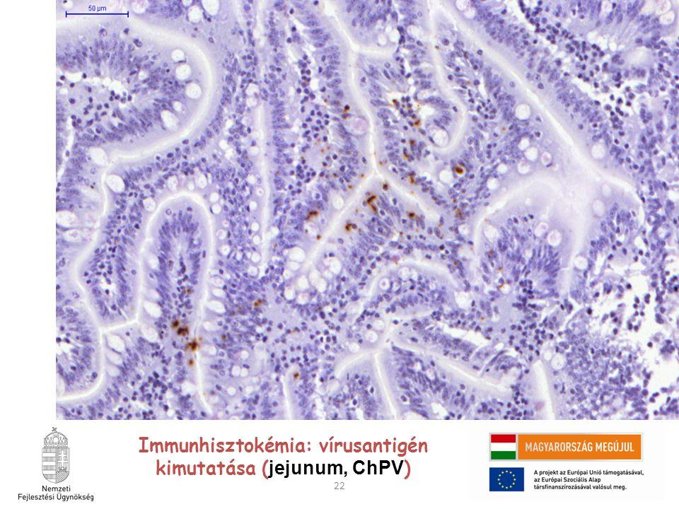 Immunhisztokémia: vírusantigén kimutatása (jejunum, ChPV)