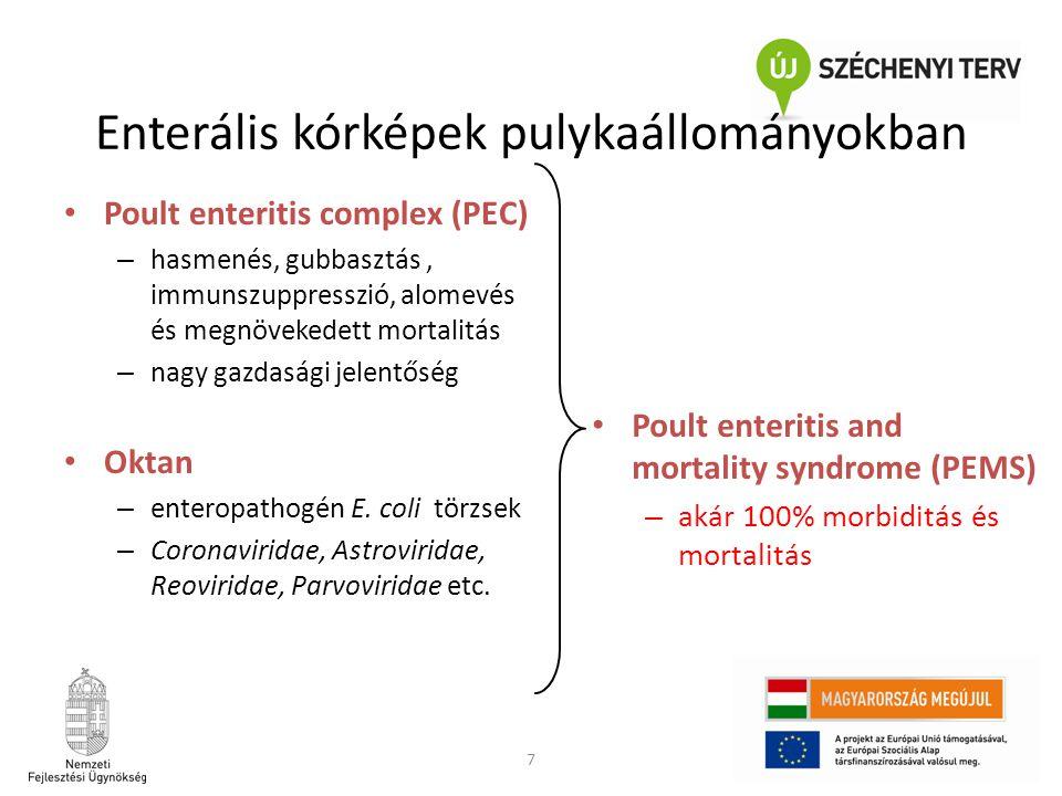 Enterális kórképek pulykaállományokban