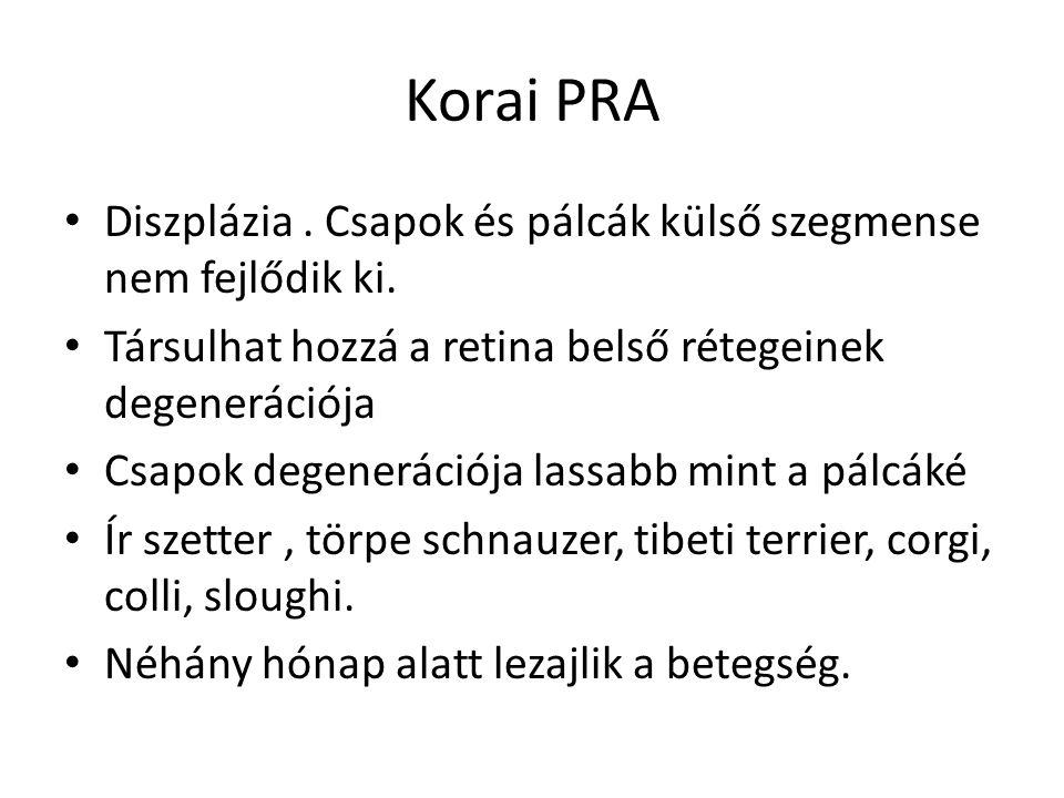 Korai PRA Diszplázia . Csapok és pálcák külső szegmense nem fejlődik ki. Társulhat hozzá a retina belső rétegeinek degenerációja.