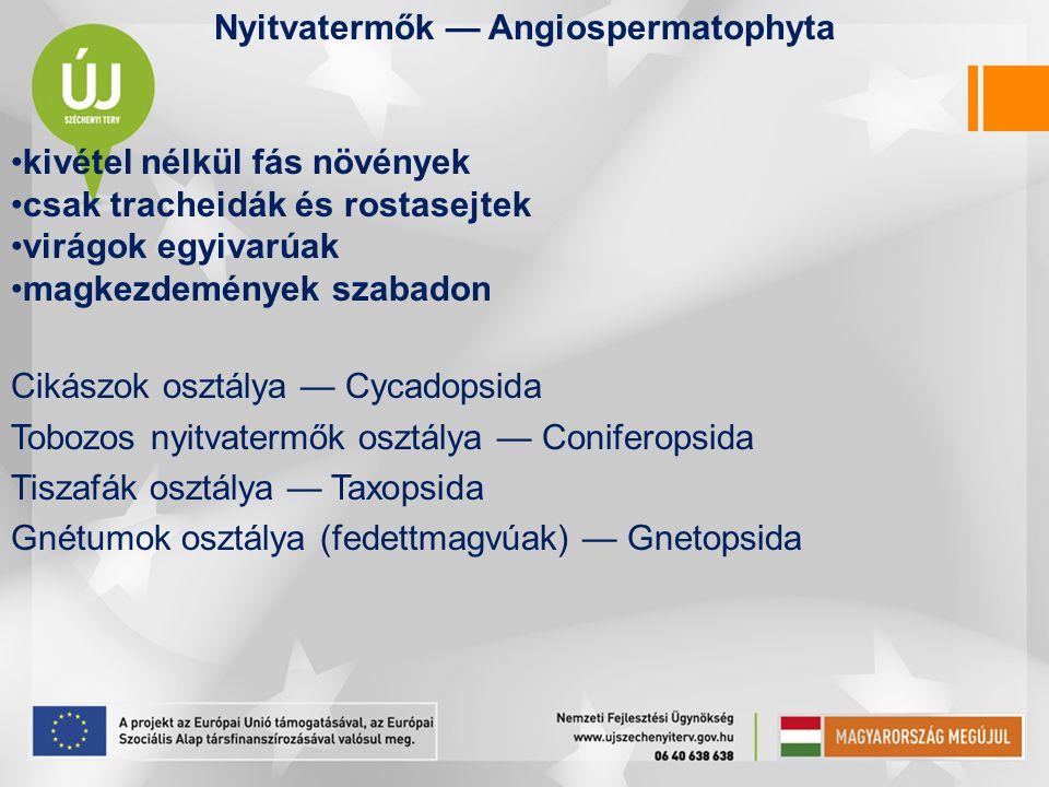 Nyitvatermők — Angiospermatophyta