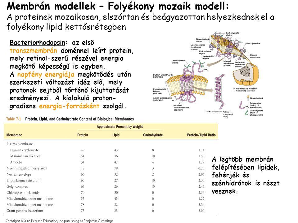 Membrán modellek – Folyékony mozaik modell: