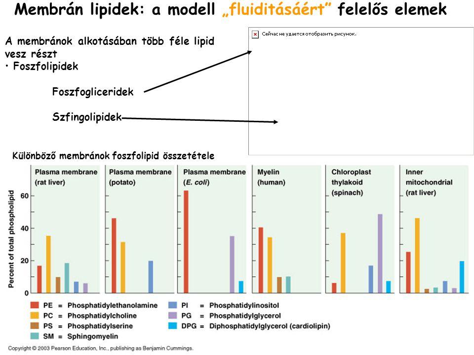 """Membrán lipidek: a modell """"fluiditásáért felelős elemek"""