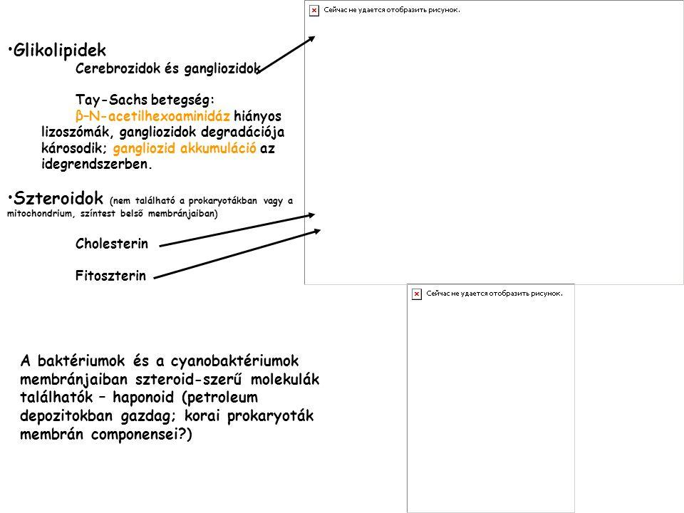 Glikolipidek Cerebrozidok és gangliozidok. Tay-Sachs betegség: