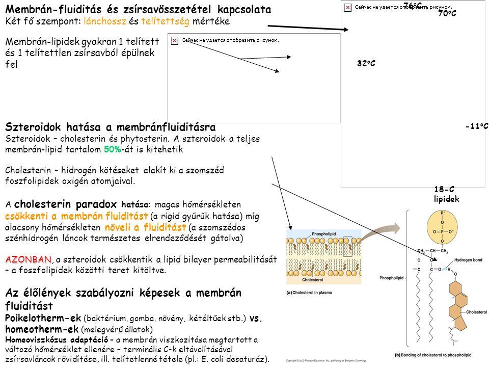 Membrán-fluiditás és zsírsavösszetétel kapcsolata