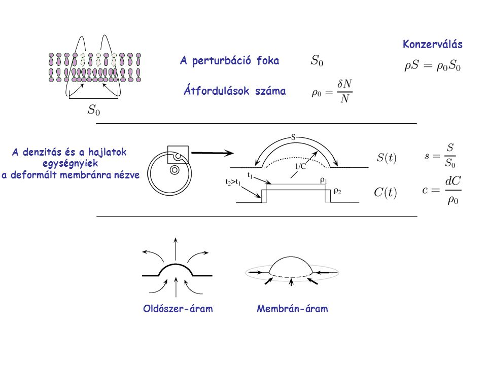 A denzitás és a hajlatok a deformált membránra nézve