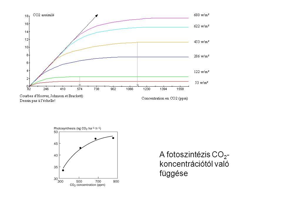 A fotoszintézis CO2-koncentrációtól való függése
