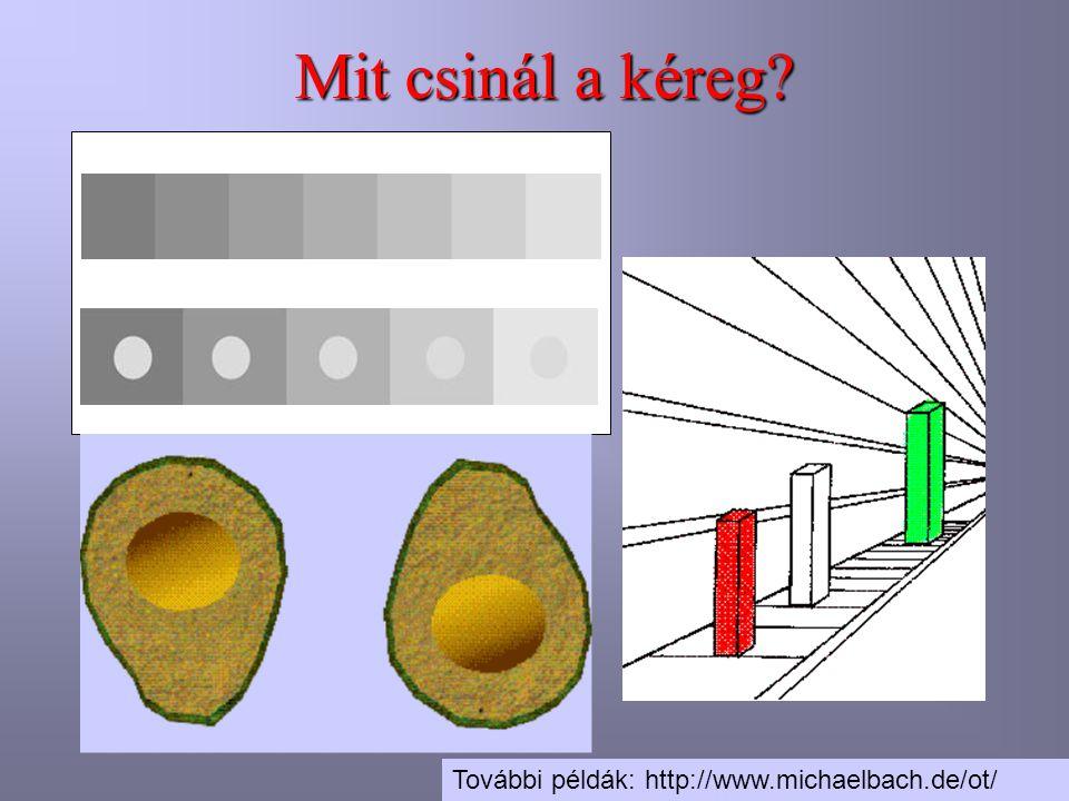 Mit csinál a kéreg További példák: http://www.michaelbach.de/ot/