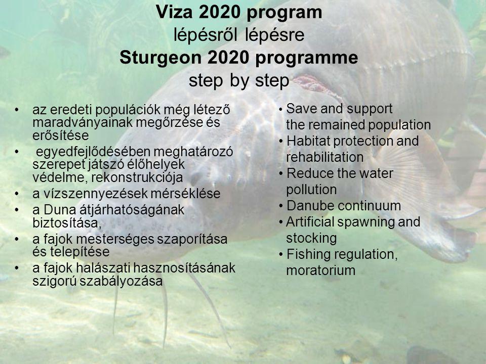 Viza 2020 program lépésről lépésre Sturgeon 2020 programme step by step